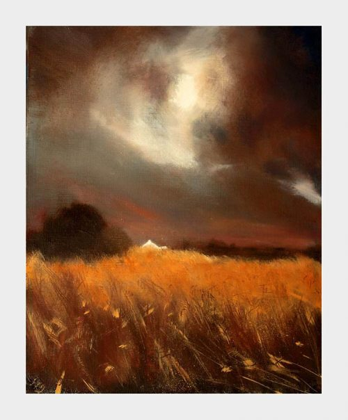A dark brooding sky contrast with the orange-gold field